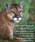 cougar.sighting