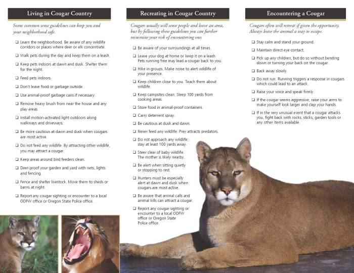 Download brochure (PDF) at http://www.dfw.state.or.us/wildlife/living_with/docs/CougarBroch.pdf
